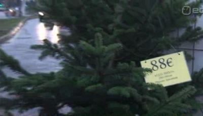Uhke jõulupuu